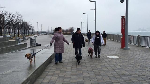 People enjoy walking their dogs along Detroit's Riverwalk as the canines take the lead.  It's one of  a number of activities and services for dog owners in Detroit organized by Midtown-based Canine to Five.