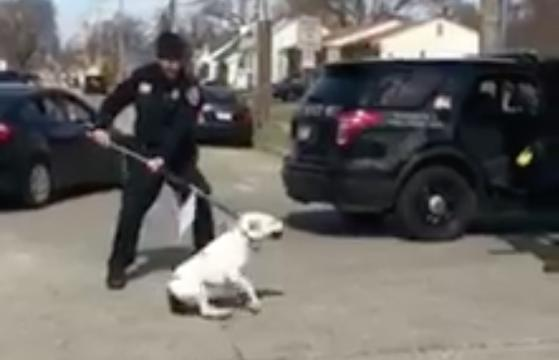 Dog tazed by Roseville police
